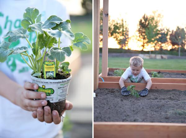 Planting Melon