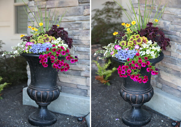How to make a containter planting